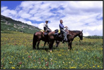 Wildflowers by horseback