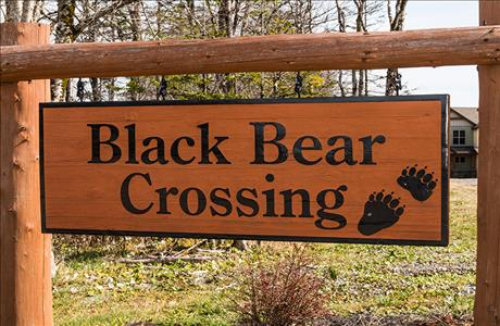 Black Bear Crossing