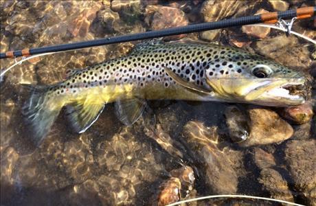 Deadwood Springs Fly Fishing - Lead SD
