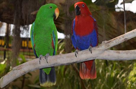 Reptile Gardens Exotic Birds - Rapid City SD
