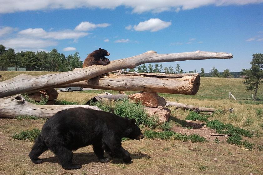 Bear Country USA - Rapid City SD